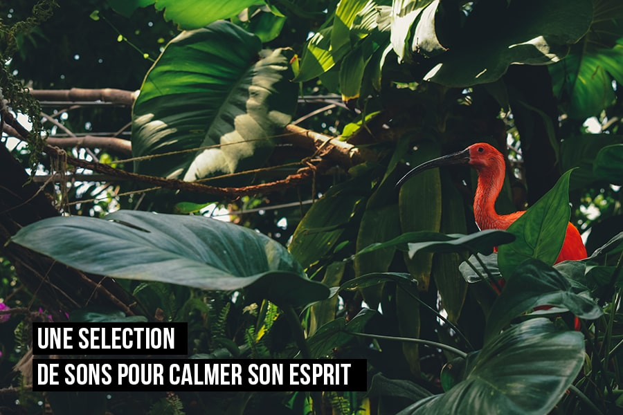 Une sélection de son de la nature pour calmer son esprit